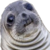 Akward Seal